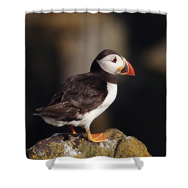 Puffin On Rock Shower Curtain