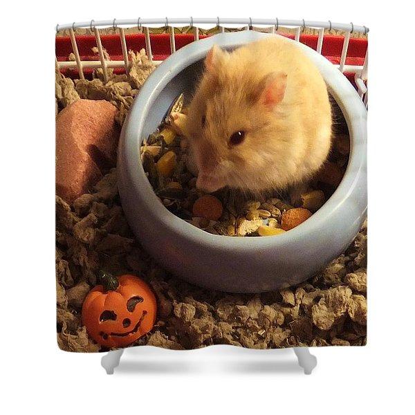 Pumpkin With Pumpkin Shower Curtain