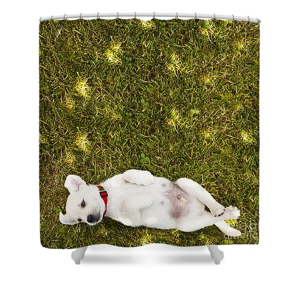 Puppy In The Grass Shower Curtain