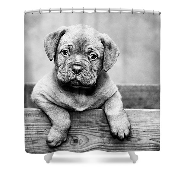 Puppy - Monochrome 3 Shower Curtain