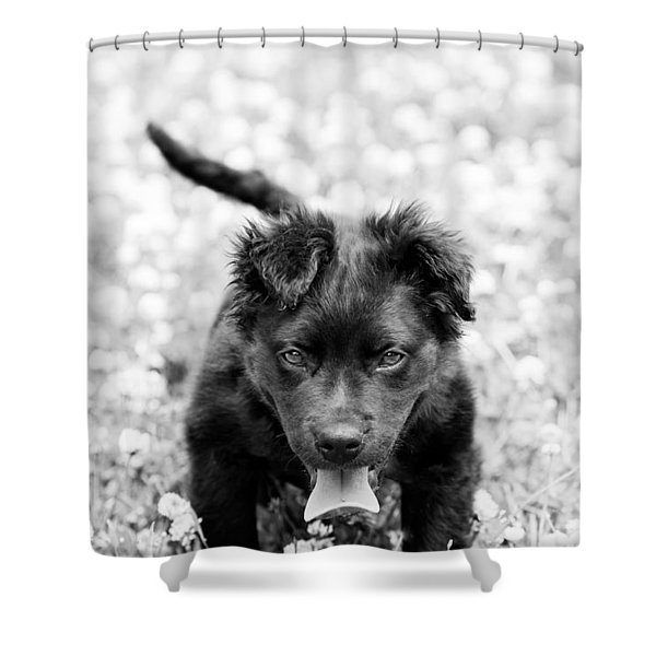 Puppy Play Shower Curtain
