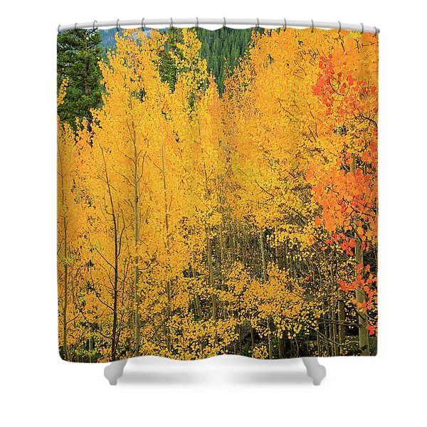 Pure Gold Shower Curtain