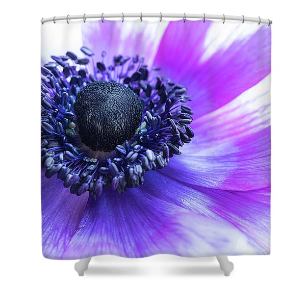 Purple Anemone Shower Curtain