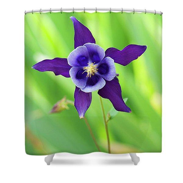 Purple Aquilegia Flower Shower Curtain