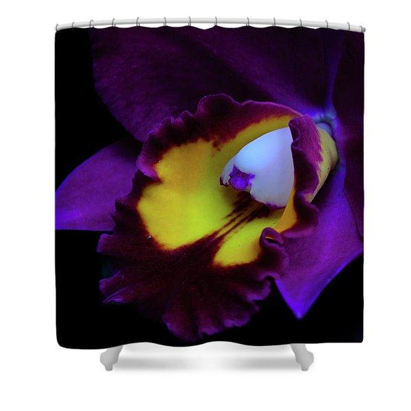 Purple Beauty Shower Curtain