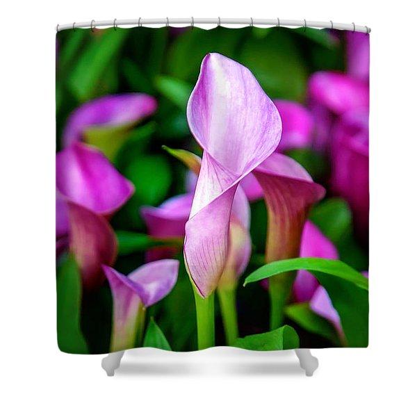 Purple Calla Lilies Shower Curtain