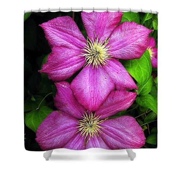 Purple Clematis 2 Shower Curtain