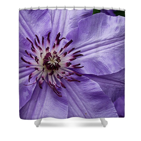 Purple Clematis Blossom Shower Curtain
