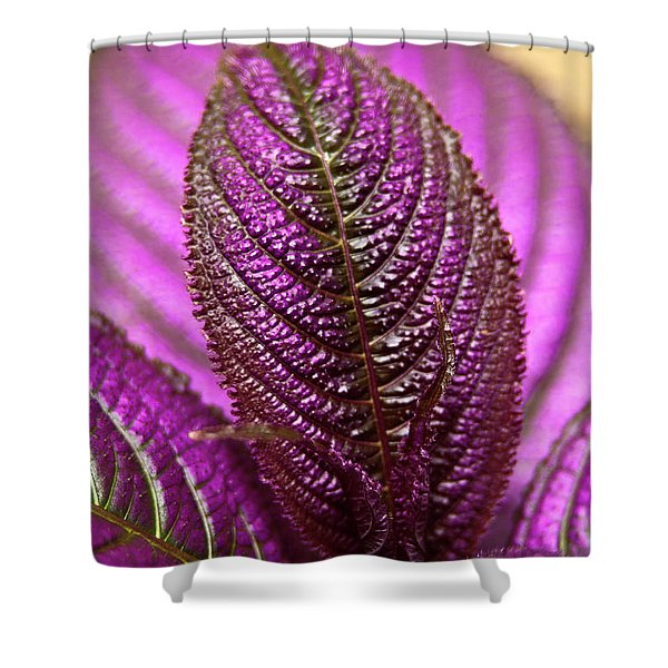 Shower Curtain featuring the photograph Purple Coleus by Carolyn Marshall