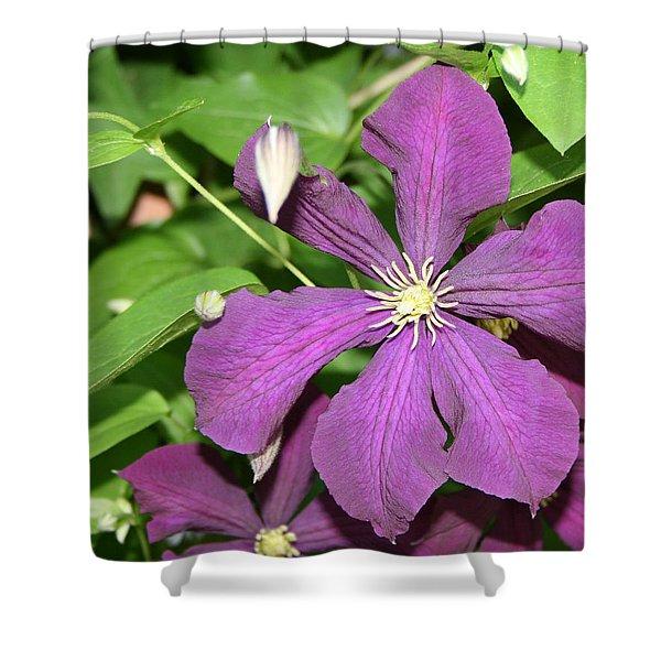 Purple Delite Shower Curtain
