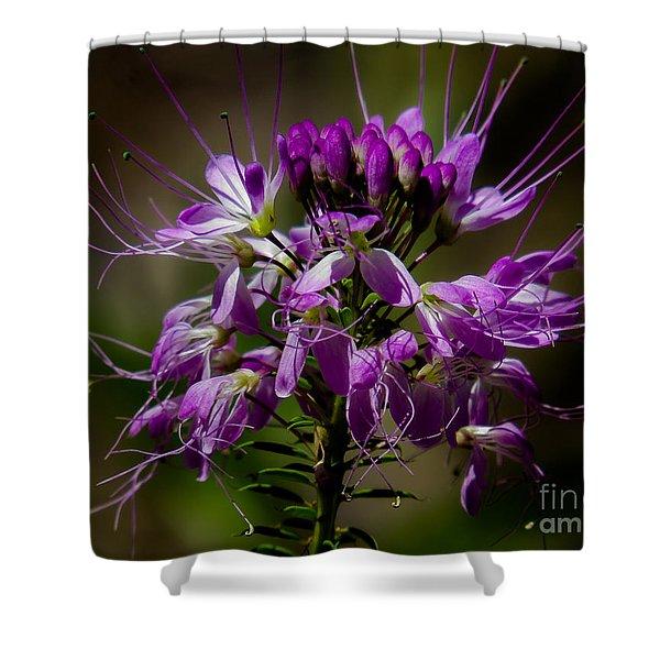 Purple Flower 1 Shower Curtain