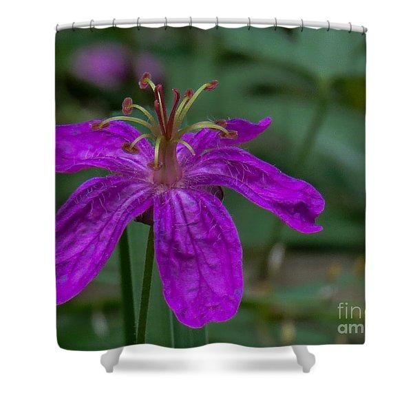 Purple Flower 5 Shower Curtain