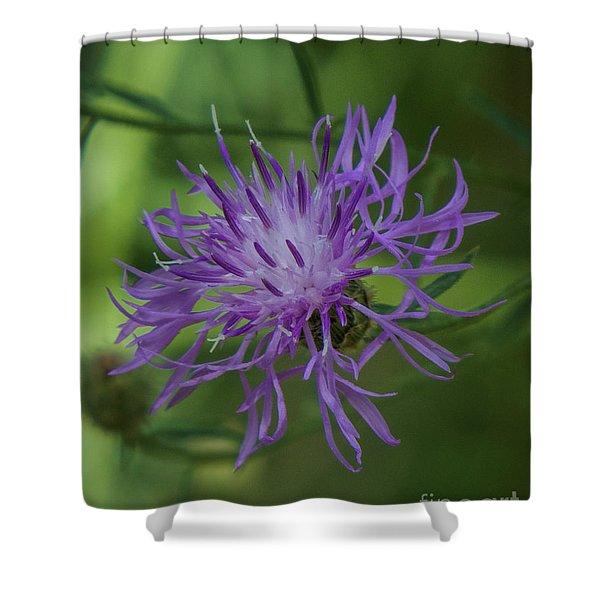 Purple Flower 8 Shower Curtain