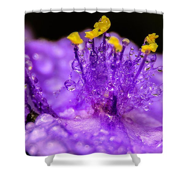Purple Flower After The Rain Shower Curtain