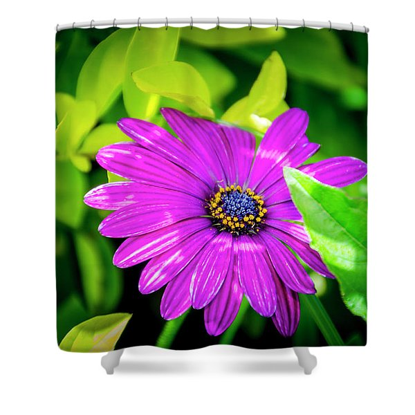 Purple Flower Shower Curtain