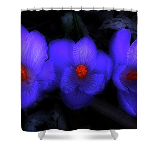 Beautiful Blue Purple Spring Crocus Blooms Shower Curtain