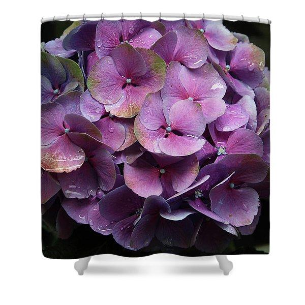Purple Hydrangea- By Linda Woods Shower Curtain