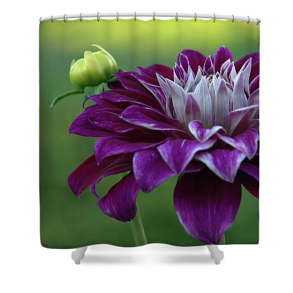 Purple Lady Shower Curtain
