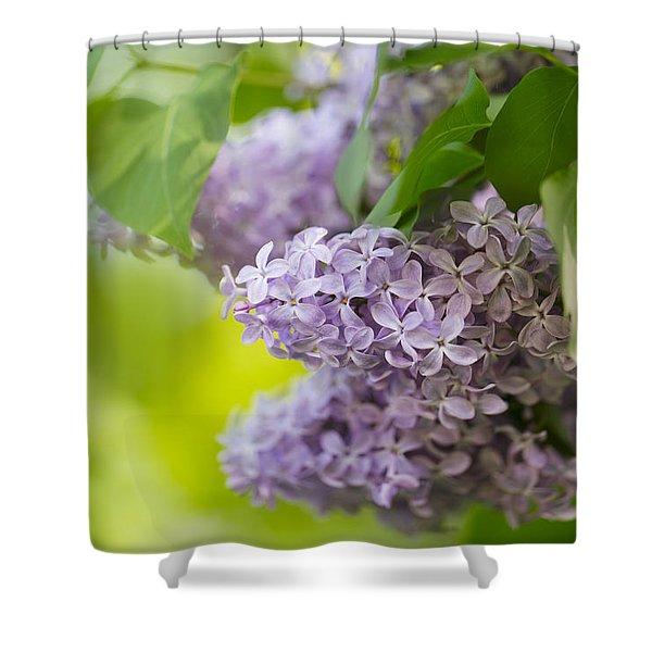 Purple Lilac Shower Curtain