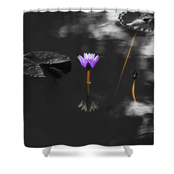 Purple Lily In Black And White Shower Curtain