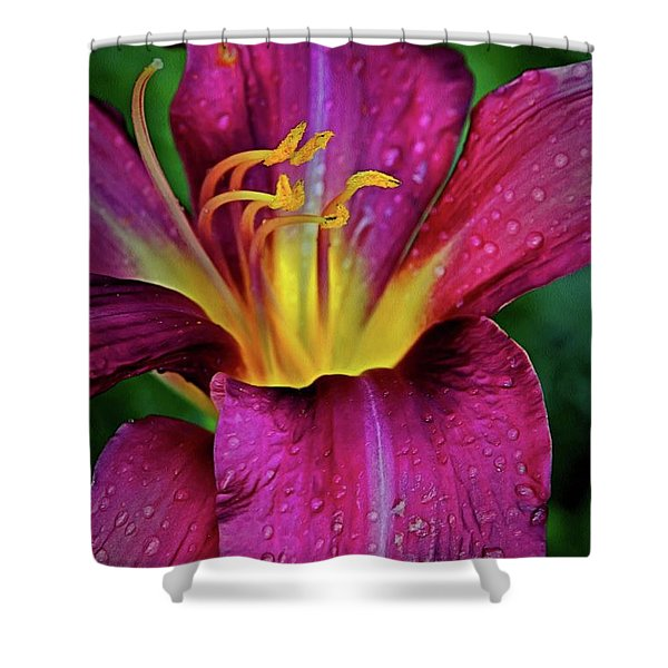 Purple Lily With Raindrops Shower Curtain