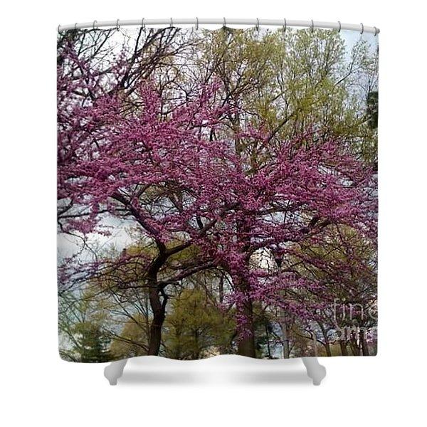 Purple Spring Trees Shower Curtain