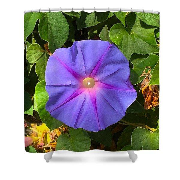 Purple Star Shower Curtain