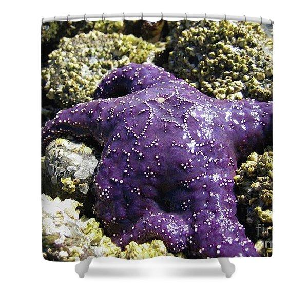 Purple Star Fish Shower Curtain