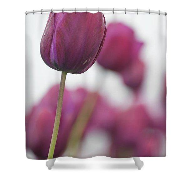 Purple Tulip 2 Shower Curtain