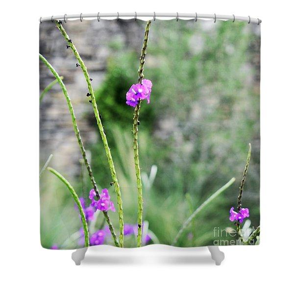 Purple Vebena Shower Curtain