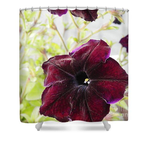 Purple Velvet  Shower Curtain