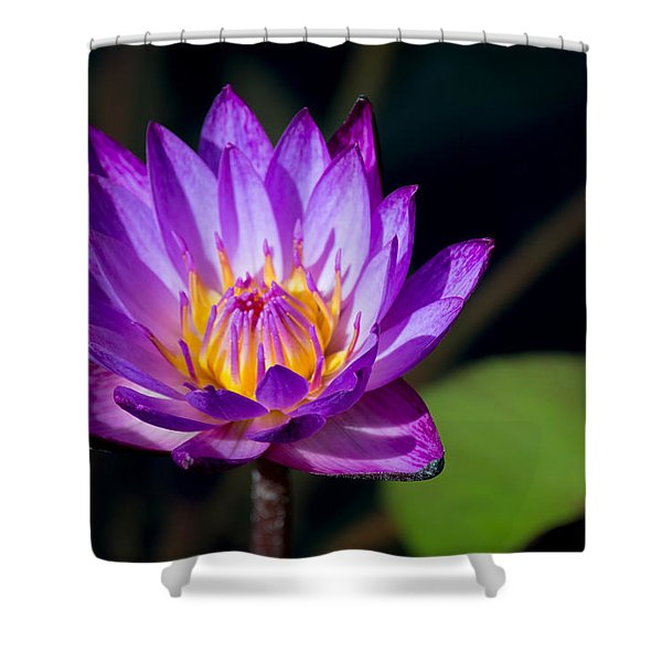 Purple Water Lily In Pond 2 Shower Curtain