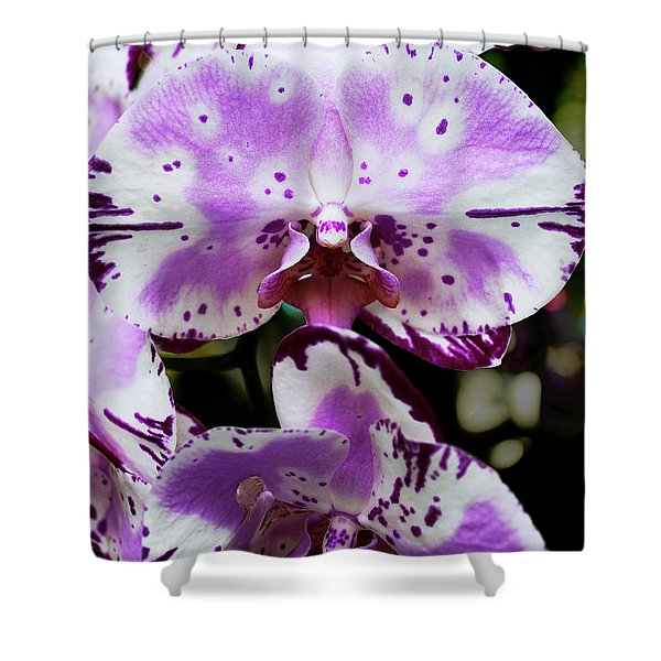 Purple And White Orchid Shower Curtain