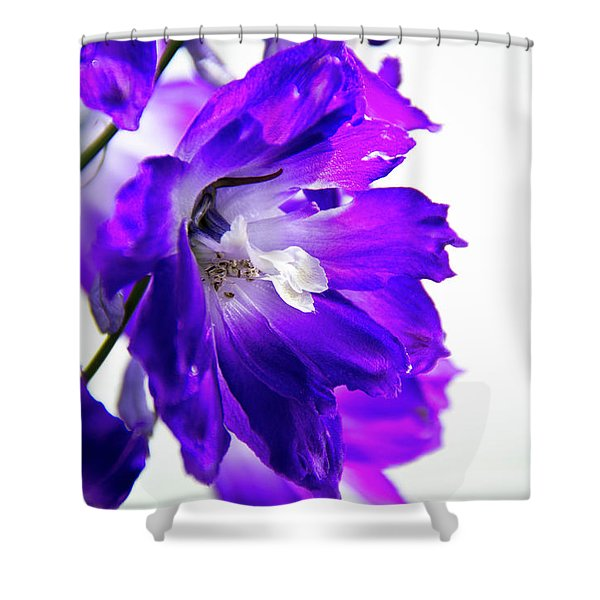 Purpled Shower Curtain