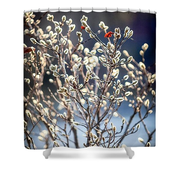Pussy Willow Shower Curtain