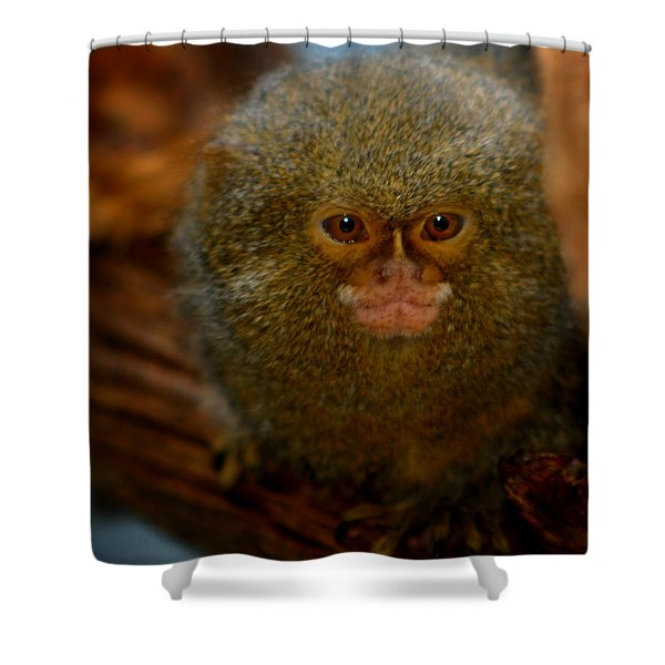 Pygmy Marmoset Shower Curtain