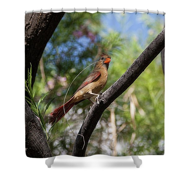 Pyrrhuloxia At Work Shower Curtain