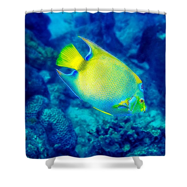 Shower Curtain featuring the photograph Queen Angelfish I by Perla Copernik