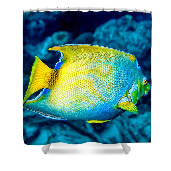 Shower Curtain featuring the photograph Queen Angelfish II by Perla Copernik