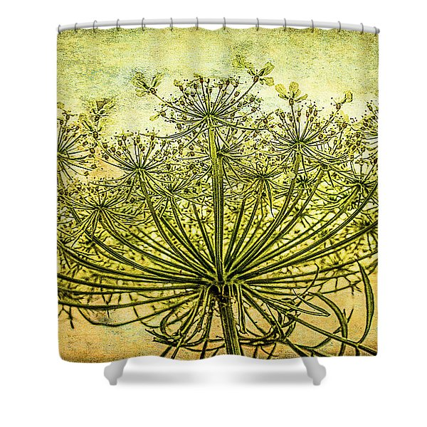 Queen Anne's Lace At Sunrise Shower Curtain