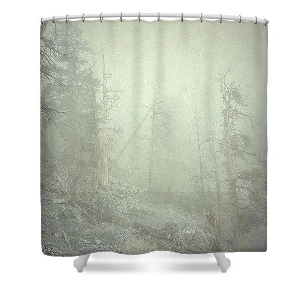 Quiet Type Shower Curtain