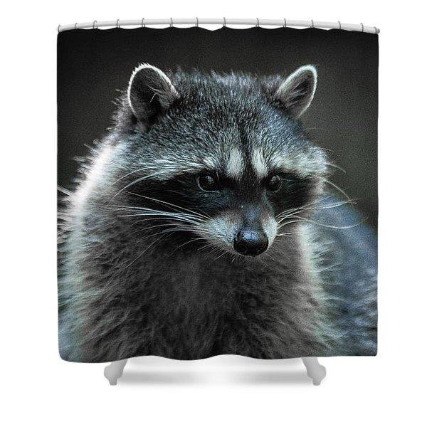 Raccoon 2 Shower Curtain
