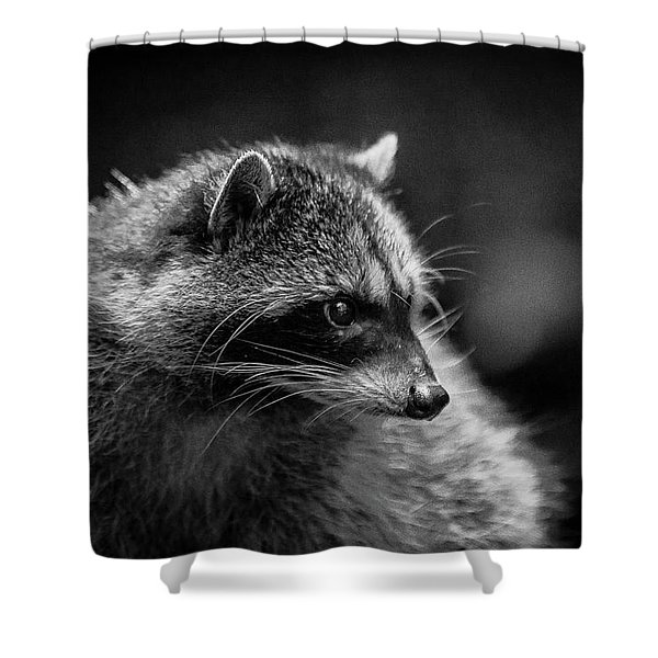 Raccoon 3 Shower Curtain