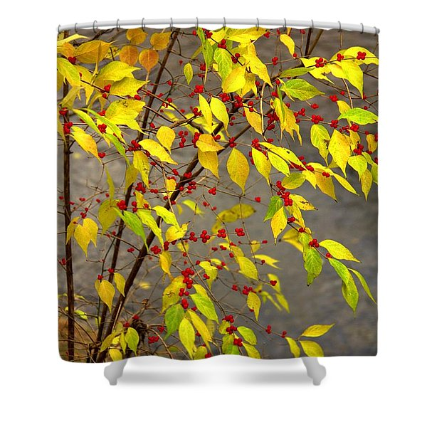 Raccoon Snacks Shower Curtain