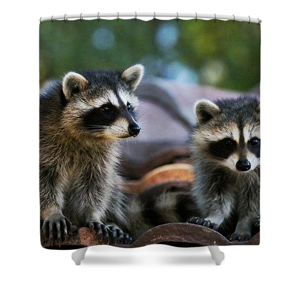 Racoons On The Roof Shower Curtain