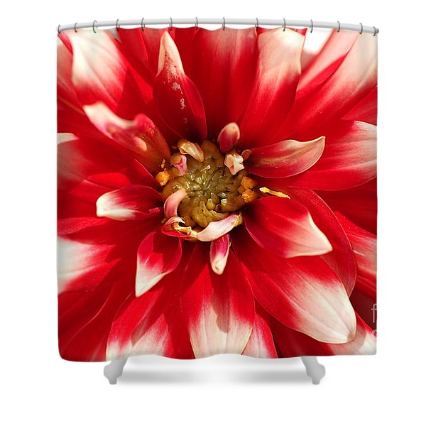 Radiant Dahlia Shower Curtain