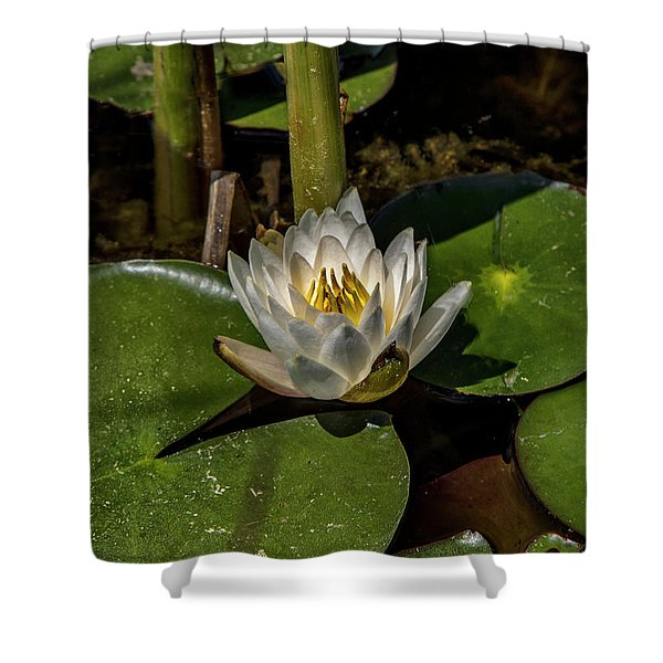 Radiant White Pond Lily  Shower Curtain