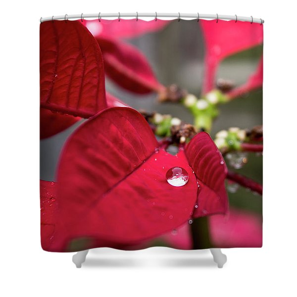 Rain Drop On A Poinsettia  Shower Curtain