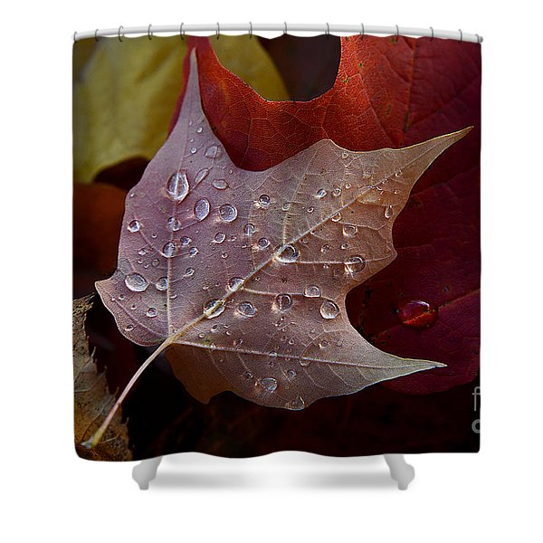 Rain Droplets On Leaf Shower Curtain