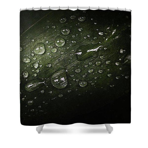 Rain Drops On Leaf Shower Curtain